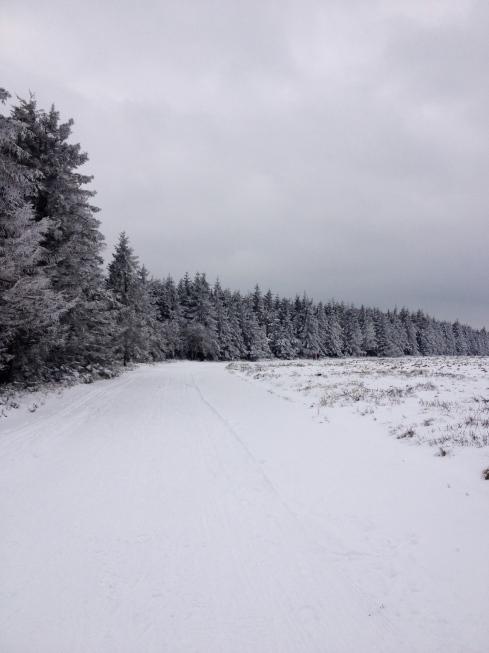 Paysage hivernal peu commun en Belgique