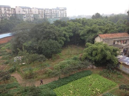 La vue de ma chambre à Chengdu